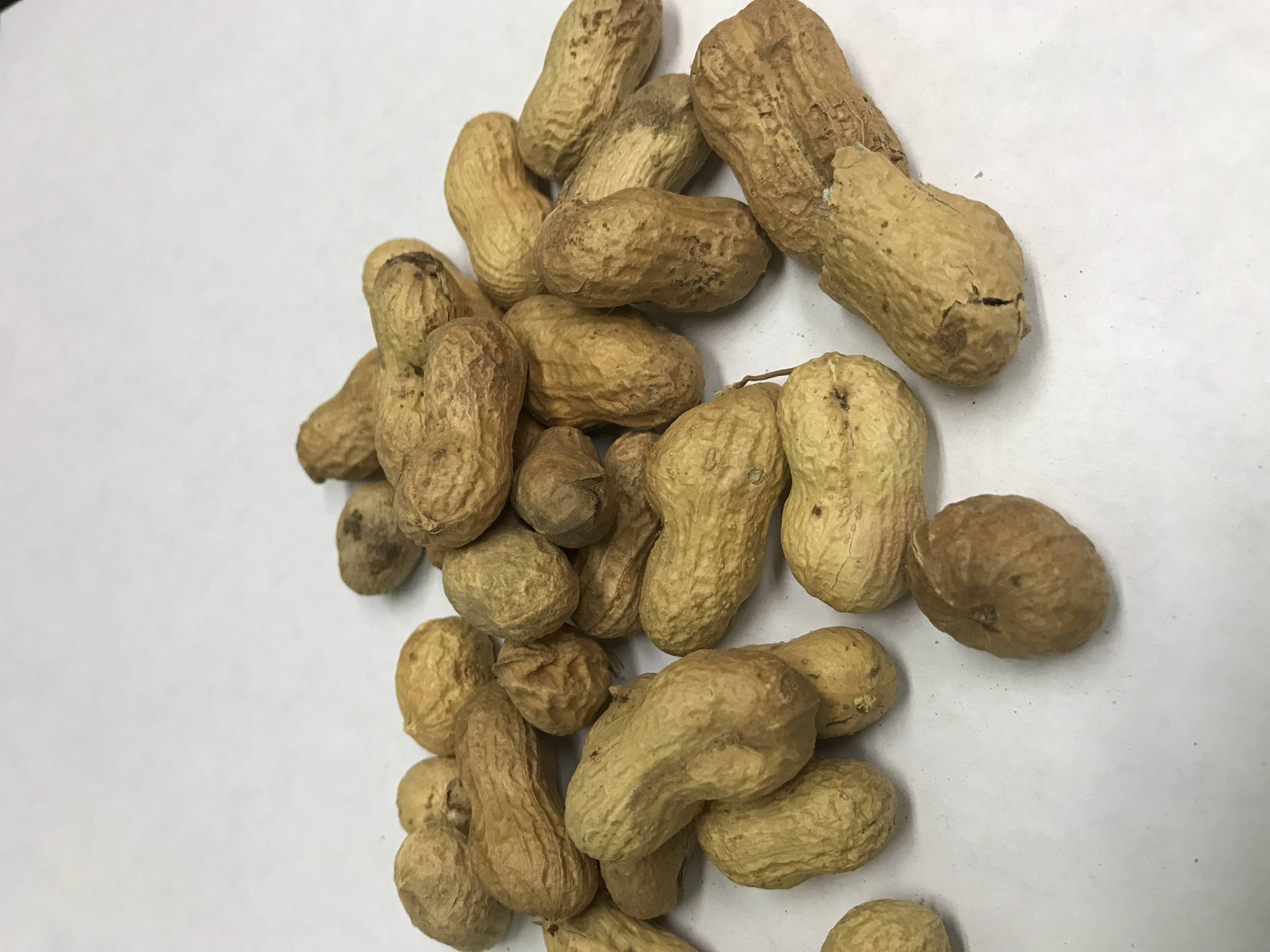Peanuts In the Shell